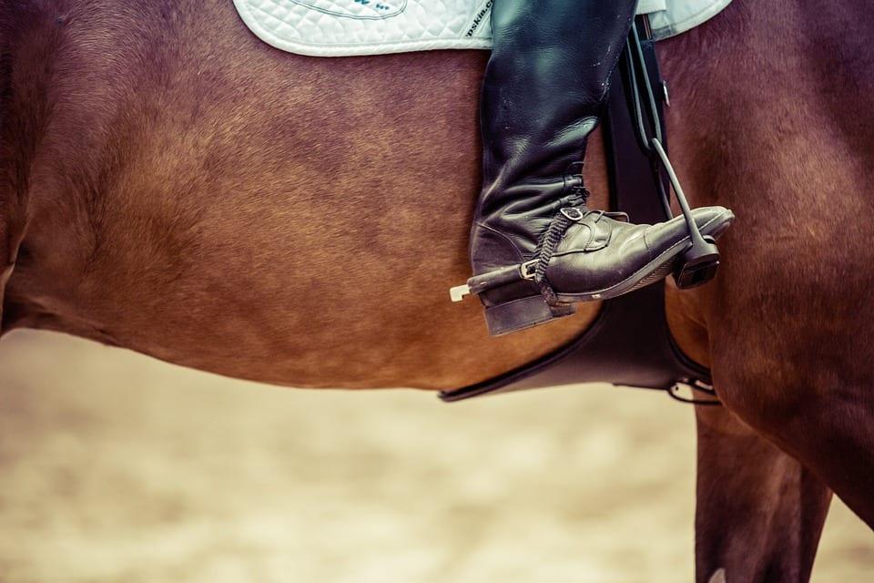 Royal Dublin Horse Show
